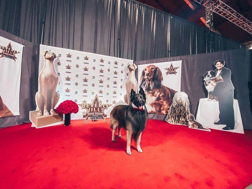 NBC National Dog Show 2020 Showcase Image